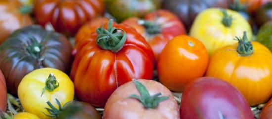 Maraîchers: lutte contre le virus de la tomate